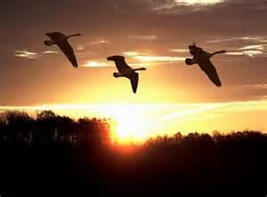 geeseflyinghome