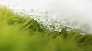 grass-under-the-snow-jpeg-960x540