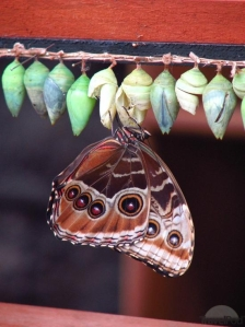 butterflycocoon