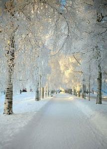 Fresh-Snow